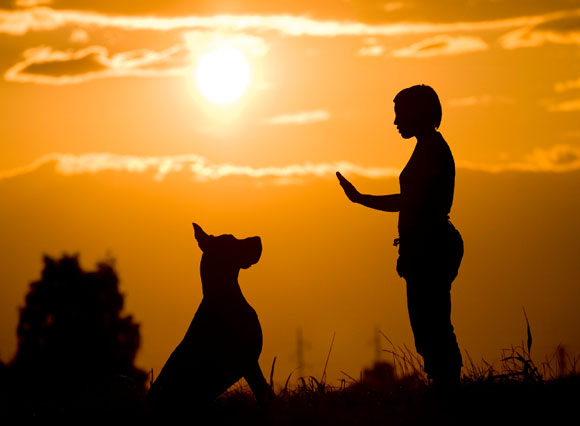 great dane with woman dog trainer sunset scene