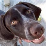 Thumbnail image for RULES TO THE RESCUE: Help a Rescue Dog Feel Secure