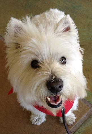 dog-training-deadly-collar
