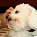 Thumbnail image for EARLY WARNING SIGNS OF CANINE EMERGENCIES