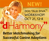 dHarmony dog adoption workshop