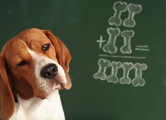 """D"" in Daycare? ""A"" in Canine!"