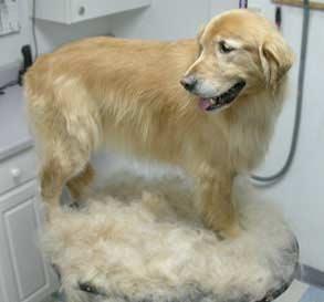 furminator dog fur remover